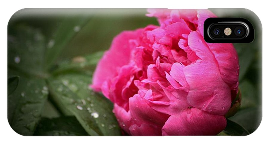 Peony IPhone X Case featuring the photograph Rainsoaked Peony by Marjorie Imbeau