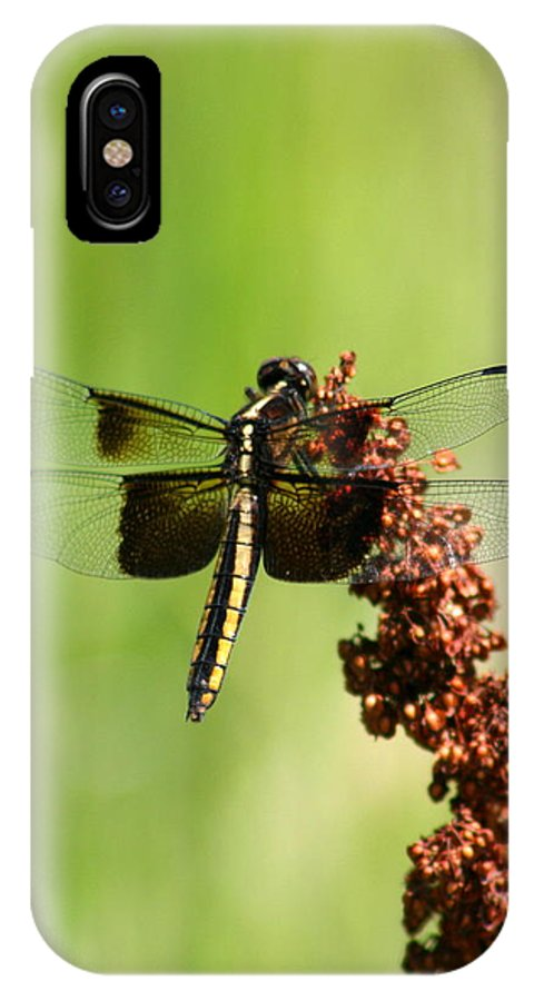 Bug IPhone X Case featuring the photograph Rally Stripe Dragonfly 7 by David Dunham