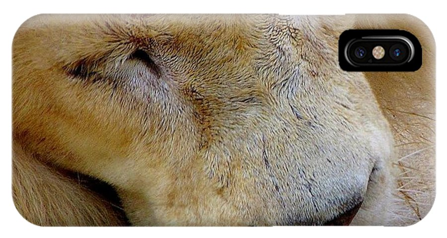 Lion IPhone X Case featuring the photograph Ramses by Lori Pessin Lafargue