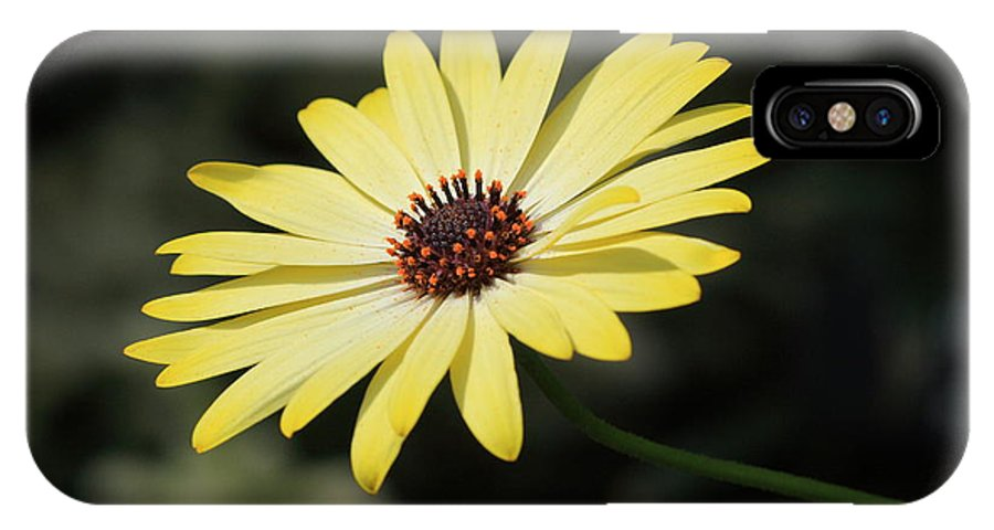 Flower IPhone X Case featuring the photograph Ray Of Sunshine by Paul Slebodnick