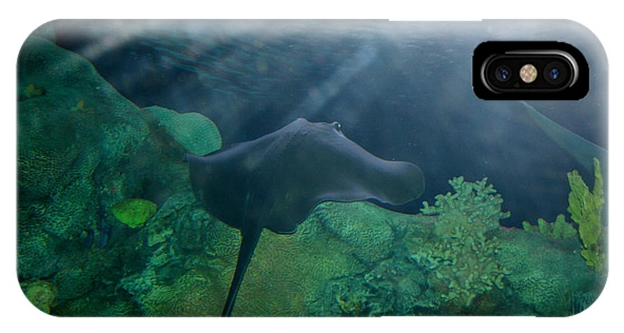 Stingray IPhone X Case featuring the photograph Ray To Rays by David Dunham