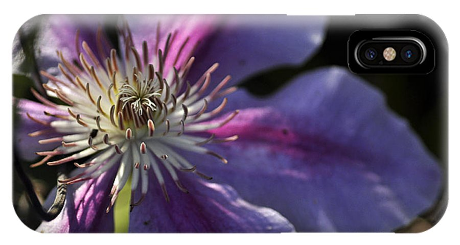 Clay IPhone X Case featuring the photograph Reach For The Sun by Clayton Bruster