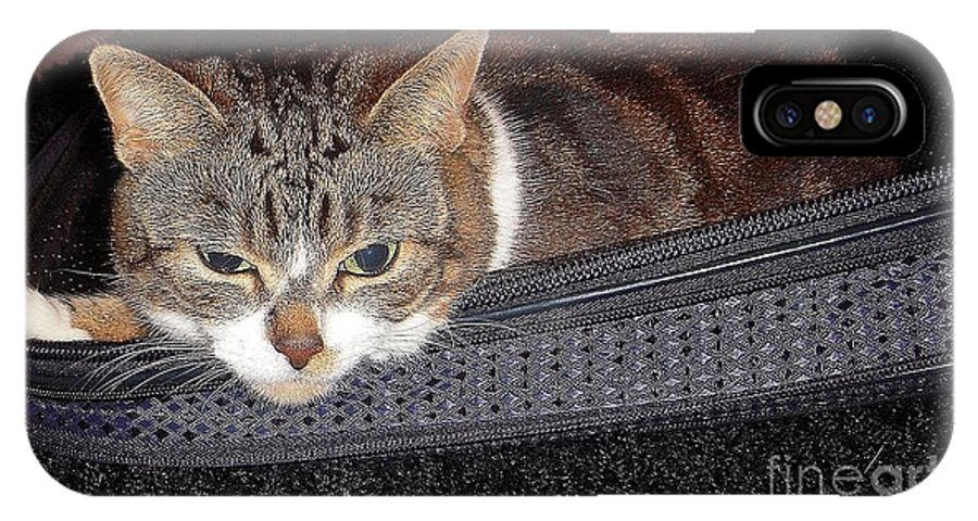 Cat IPhone X Case featuring the photograph Ready For A Trip by Vesna Antic