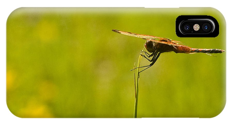 Dragonfly IPhone Case featuring the photograph Ready For Flight by Douglas Barnett