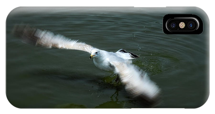Seagull IPhone X Case featuring the photograph Ready For Takeoff by Donna Blackhall