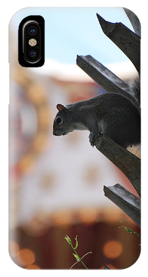 Squirrel IPhone X Case featuring the photograph Ready To Jump by Rob Hans