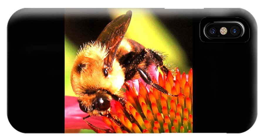 Bee IPhone X Case featuring the photograph Really Getting Into It by Ian MacDonald