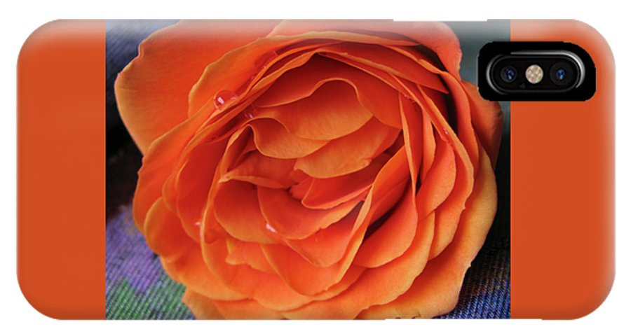 Rose IPhone X Case featuring the photograph Really Orange Rose by Ann Horn