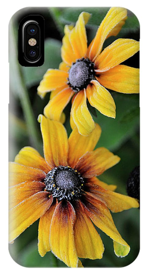 Flowers IPhone X Case featuring the photograph Rebecak And First Frost by David Arment