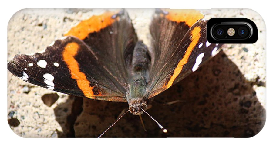 North IPhone X Case featuring the photograph Red Admiral Close by Nicholas Miller