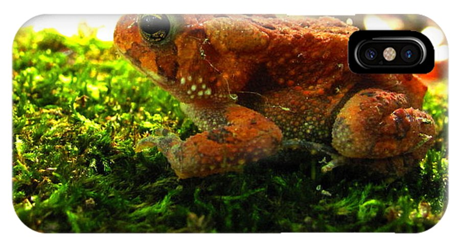Red Phase American Toad Images Red American Toad Photo Prints Maryland Amphibian Images Nature Forest Ecosystem Biodiversity Red Toad On Moss Images Colorful Critter Prints IPhone X Case featuring the photograph Red American Toad by Joshua Bales