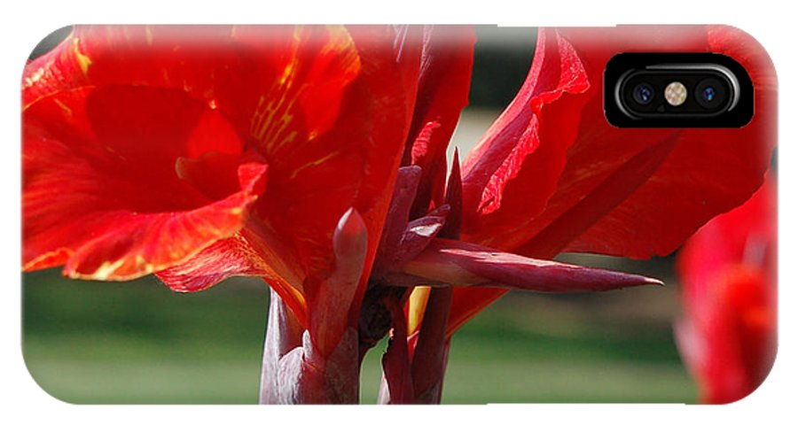 Asiatic Lily IPhone Case featuring the photograph Red And Yellow Asiatic Lilies by Suzanne Gaff