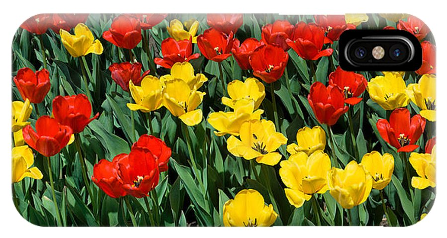 Red IPhone X / XS Case featuring the photograph Red And Yellow Tulips Naperville Illinois by Michael Bessler