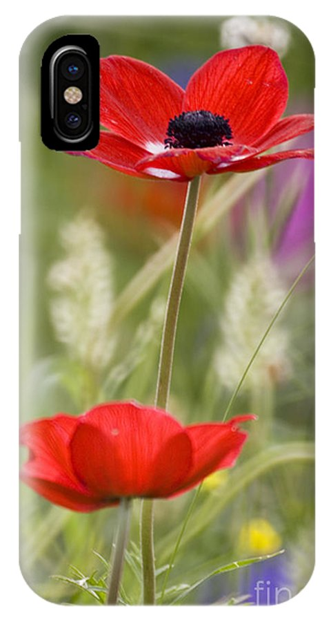 Red IPhone X Case featuring the photograph Red Anemone Coronaria In Nature by Ofer Zilberstein