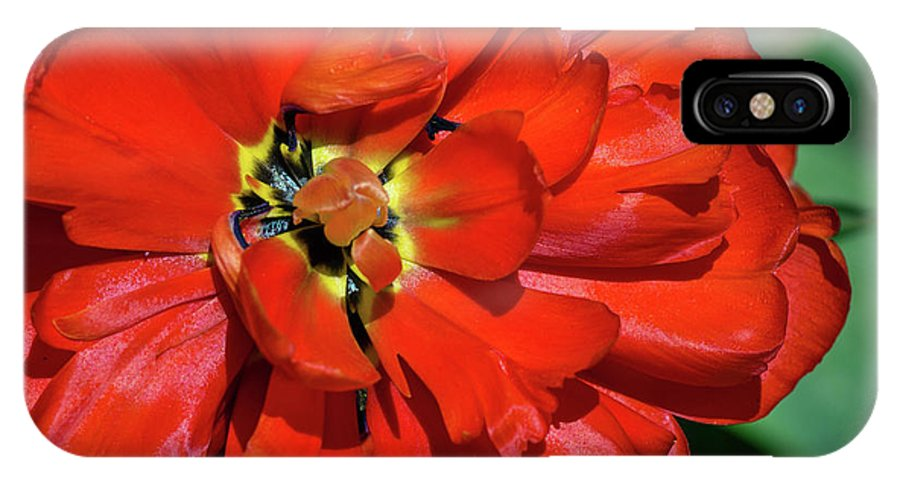 Red Flowers IPhone X Case featuring the photograph Red Ball Of Fire by Centre Art Gallery By Christine Montenegro