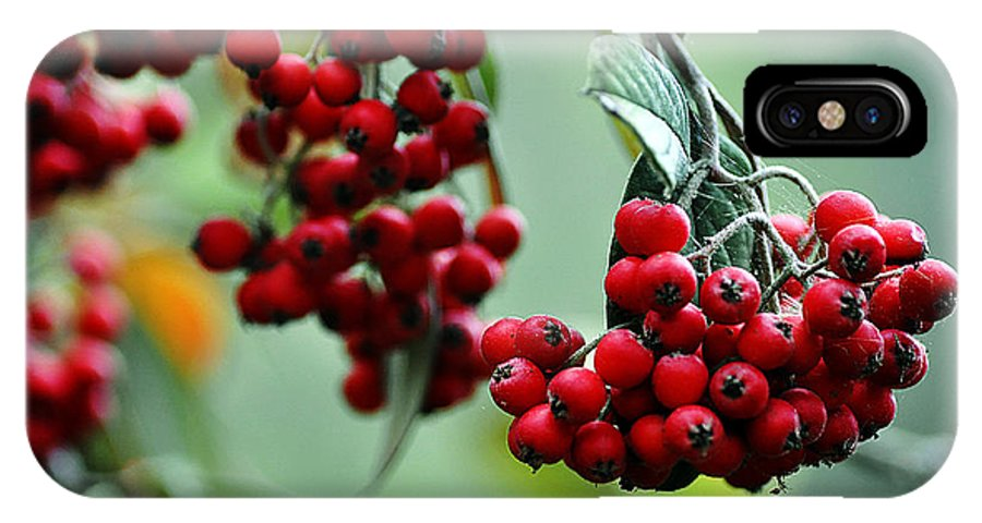 Clay IPhone Case featuring the photograph Red Berries by Clayton Bruster