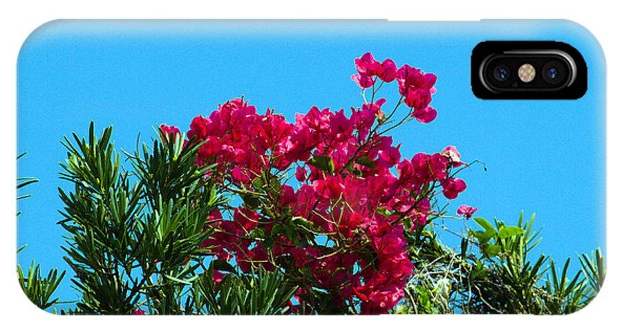 Red; Bougainvillea; Glabra; Juniperus; Vitginiana; Silicicola; Coastal; Cedar; Tree; Vine; Grow; Gro IPhone X Case featuring the photograph Red Bougainvillea Glabra Vine by Allan Hughes