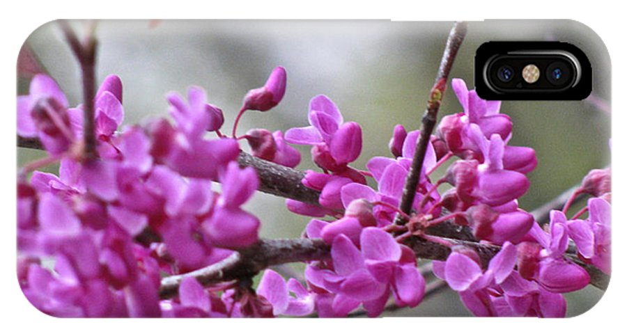Red Bud Blossoms IPhone X Case featuring the photograph Red Bud Blossoms by Debra   Vatalaro