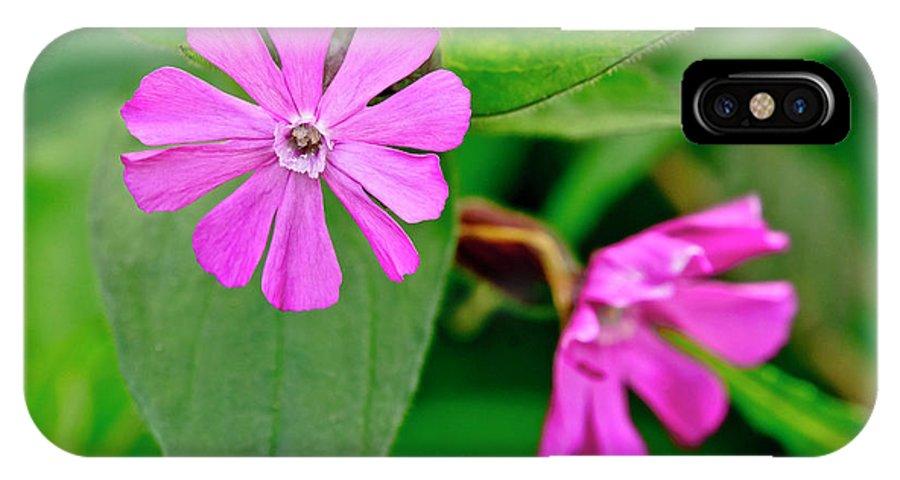 Pinky-red IPhone X Case featuring the photograph Red Campion - Fairy Flower. by Elena Perelman