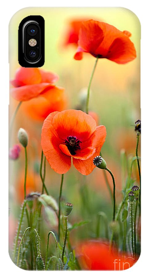 Red corn poppy flowers 06 iphone x xs case for sale by nailia schwarz poppy iphone x xs case featuring the photograph red corn poppy flowers 06 by nailia mightylinksfo