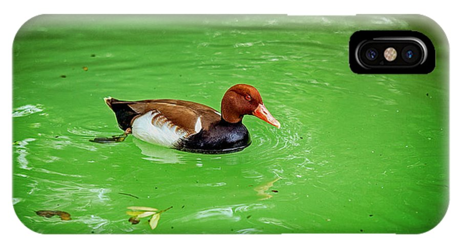 Duck IPhone X Case featuring the photograph Red-crested Pochard Duck by Sennie Pierson