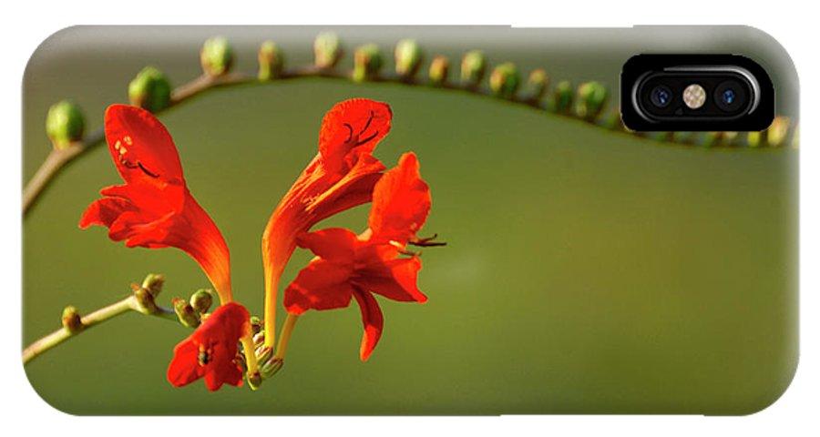 Crocosmia IPhone X Case featuring the photograph Red Crocosmia by Lara Ellis