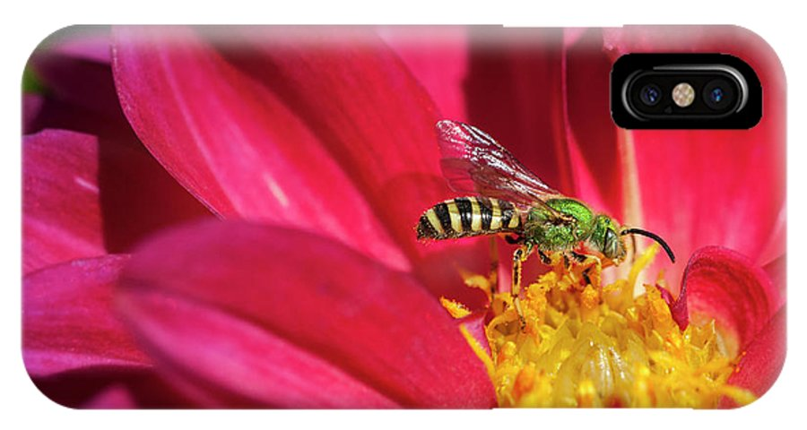 Bee IPhone X Case featuring the photograph Red Dahlia With Wasp by Alida Thorpe