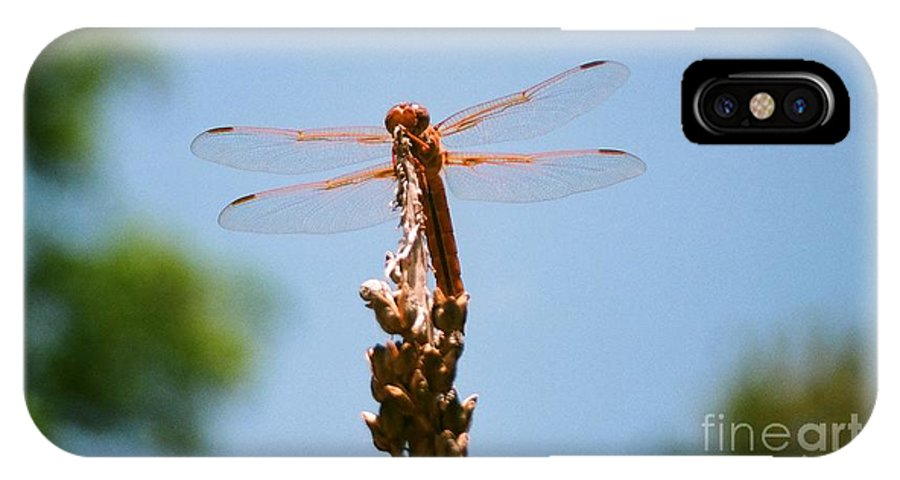 Dragonfly IPhone X Case featuring the photograph Red Dragonfly by Dean Triolo
