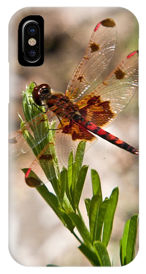 Dragonfly IPhone X Case featuring the photograph Red Dragonfly by Douglas Barnett