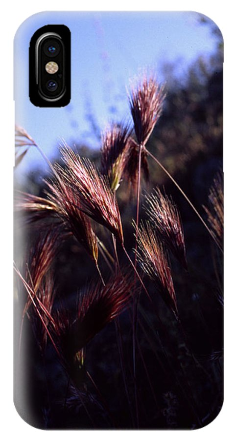 Nature IPhone X Case featuring the photograph Red Feathers by Randy Oberg