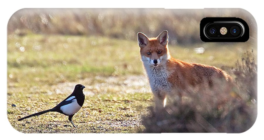 Magpie IPhone X Case featuring the photograph Red Fox And Magpie by Bob Kemp