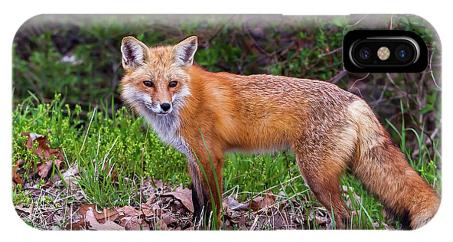 Red IPhone X Case featuring the photograph Red Fox by Andy Favors