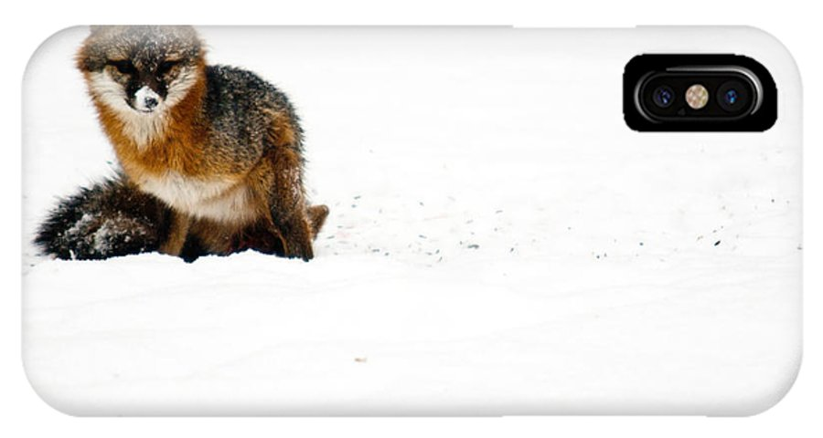 Fox IPhone X Case featuring the photograph Red Fox in the Snow by Douglas Barnett