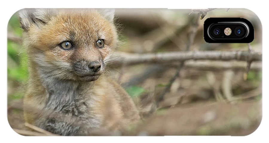 Red IPhone X / XS Case featuring the photograph Red Fox Kit by Everet Regal