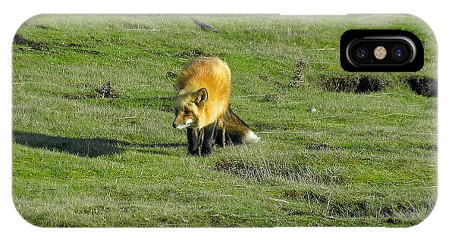 Fox IPhone X Case featuring the photograph Red Fox by Louise Magno