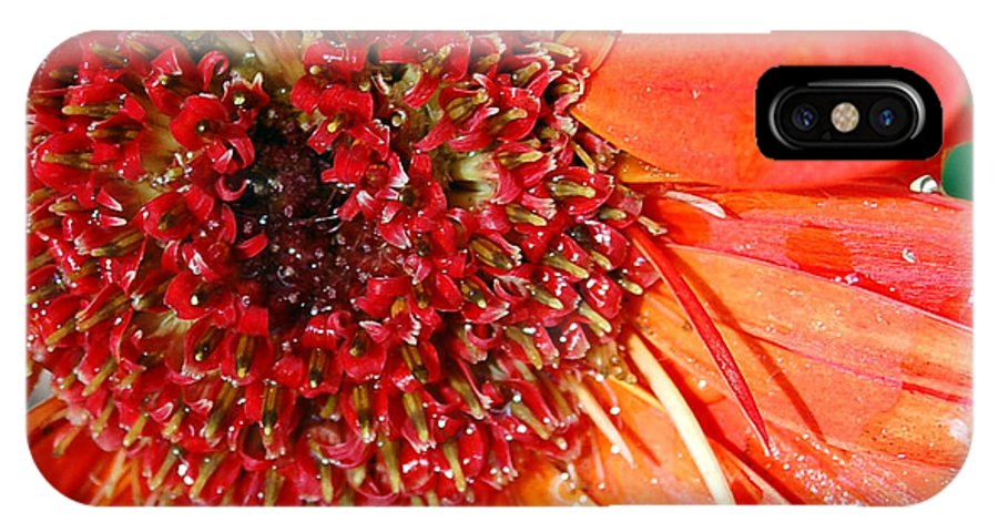 Gerber Daisy IPhone Case featuring the photograph Red Gerbera Daisy by Amy Fose