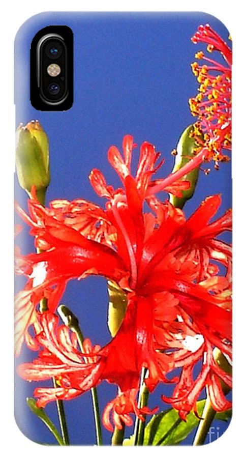 Red Hibiscus IPhone X Case featuring the photograph Red Hibiscus by Chandelle Hazen
