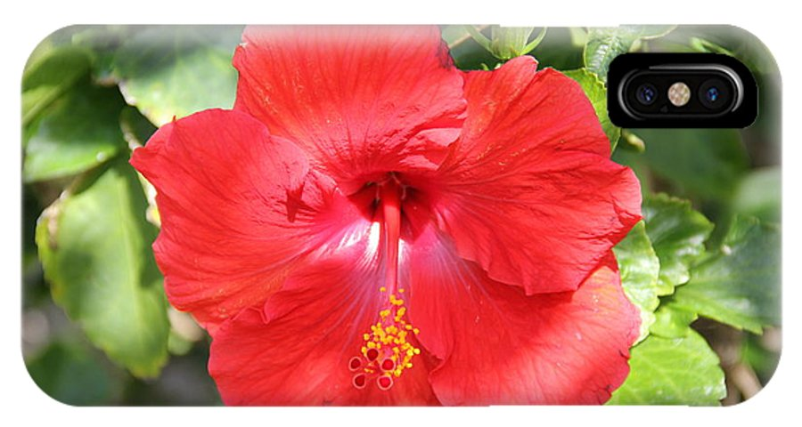 Hibiscus IPhone X / XS Case featuring the photograph Red Hibiscus by Rebecca Pavelka