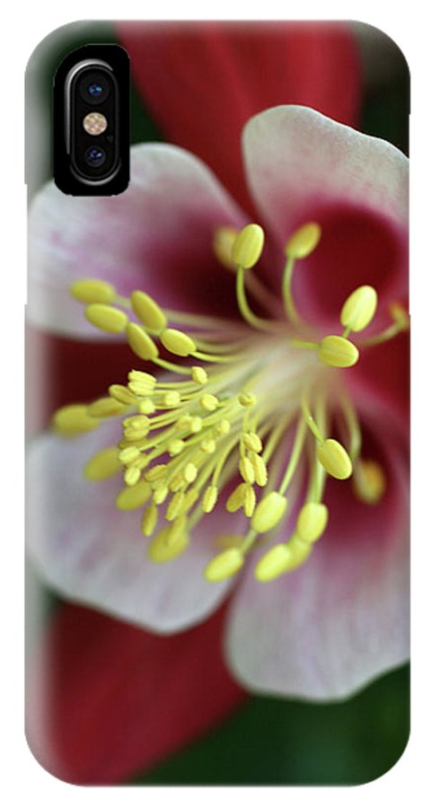 Red Hobbit Columbine Pink Yellow Photo Photography IPhone X Case featuring the photograph Red Hobbit Columbine 2 by Christina Geiger