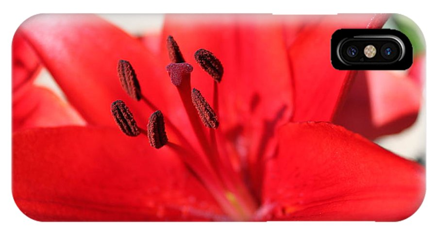 Lilly IPhone X Case featuring the photograph Red Lilly by Lauri Novak