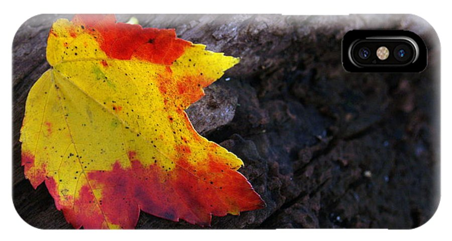 Leaf IPhone Case featuring the photograph Red Maple Leaf On Old Log by Anna Lisa Yoder