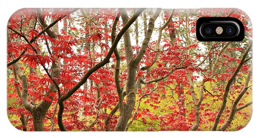 Leaves IPhone X Case featuring the photograph Red Maple Leaves And Branches by Carol Groenen