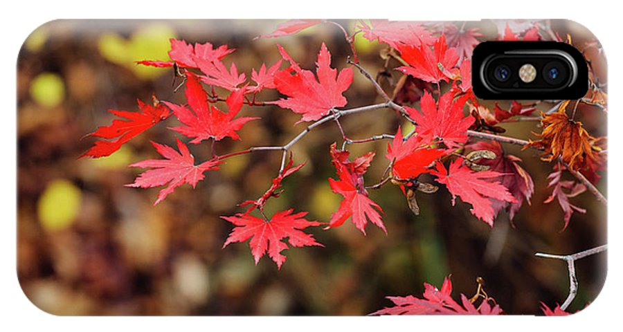 Fall IPhone X Case featuring the photograph Red Maple Leaves by Hyuntae Kim