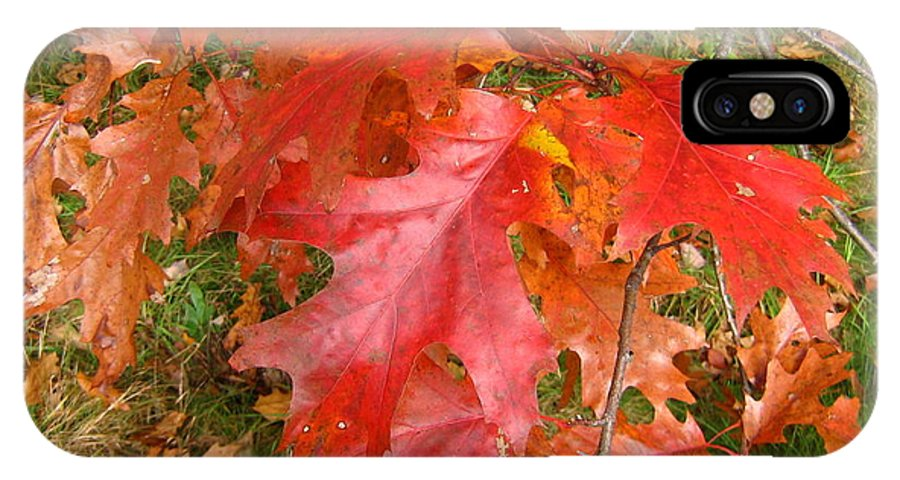 Oak IPhone X Case featuring the photograph Red Oak Leaves by Melissa Parks