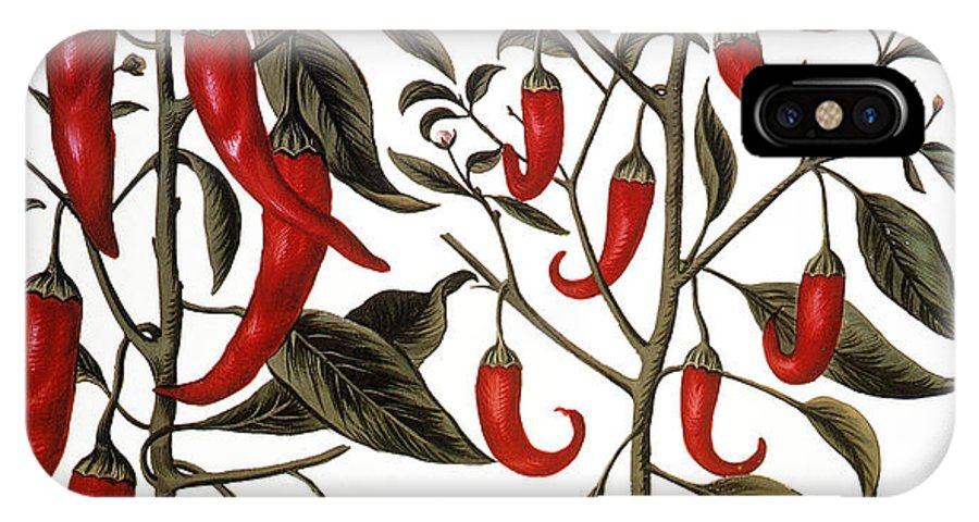 1613 IPhone X Case featuring the photograph Red Pepper Plants, 1613 by Granger