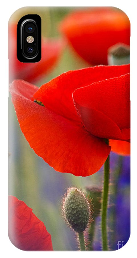 Poppies IPhone X Case featuring the photograph Red Poppies by Rachel Morrison