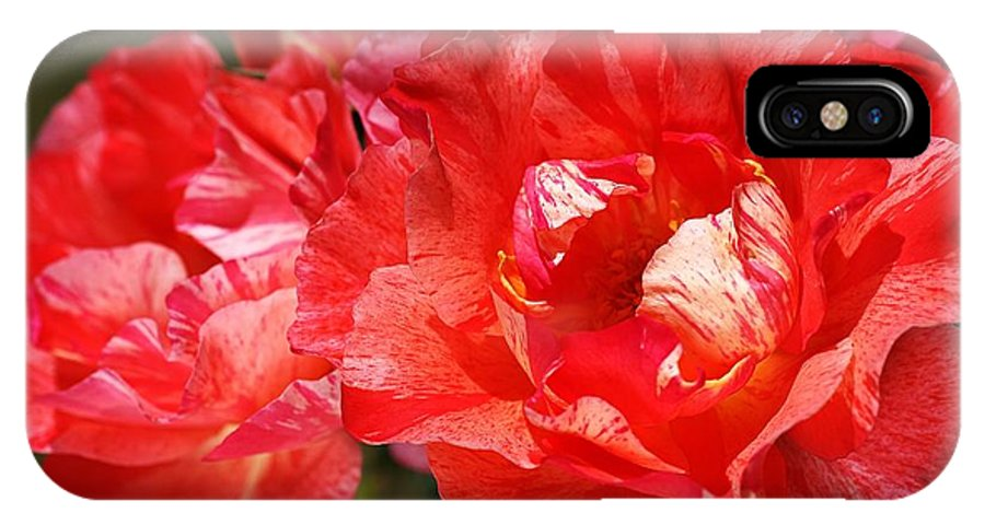 Rose IPhone X / XS Case featuring the photograph Red Rose With A Whisper Of Yellow by Joy Watson