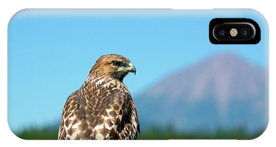 Hawk - Bird IPhone X Case featuring the photograph Red-shouldered Hawk With Mt. Mclaughlin In The Background by Bruce Block