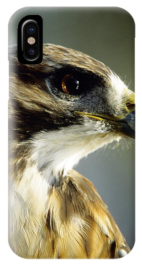 Hawk IPhone X Case featuring the photograph Red Tail Hawk by Steve Somerville
