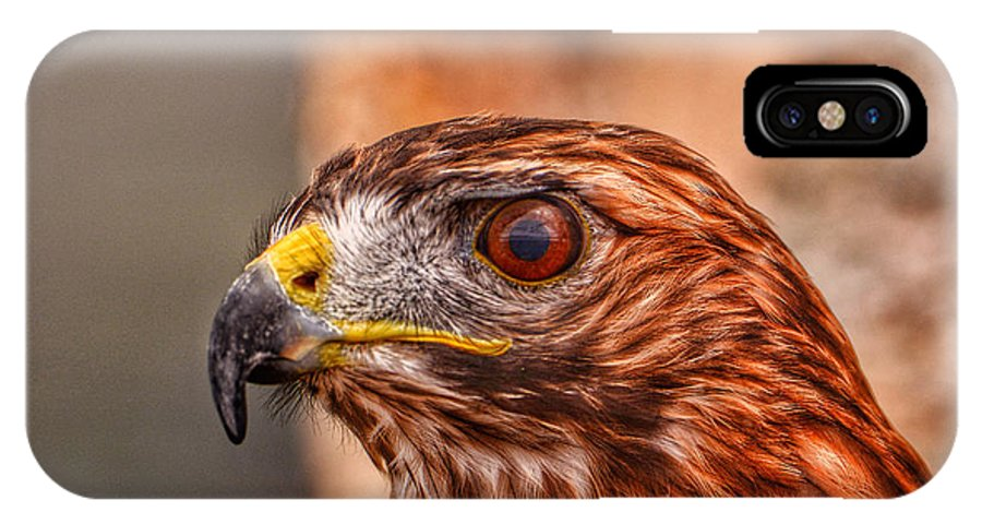 4th Anniversary IPhone X Case featuring the photograph Red Tail by Kathi Isserman